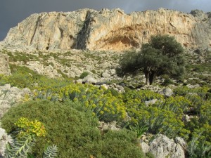 Kalymnos (Grèce)